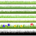 Grass patterns on white background Royalty Free Stock Photos