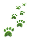 Grass pet paws patches shaped like paw prints Royalty Free Stock Photo