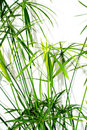 Grass plant leaves background Stock Images