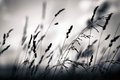 Grass plant silhouette at dawn Royalty Free Stock Photography