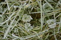 Grass and plants in the cold frosty morning sunlight delicate frost patterns greenery Royalty Free Stock Photo