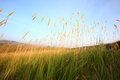 Grass in prairie Stock Images