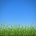 Grass profile and clear blue sky Stock Photography