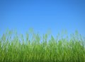 Grass profile and clear blue sky Stock Images