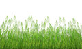Grass profile isolated on white Royalty Free Stock Image