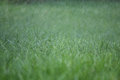 Grass, rain and water droplets Royalty Free Stock Photo
