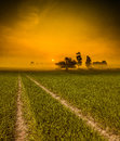 Grass road to the sun Royalty Free Stock Photo
