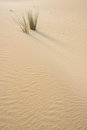 Grass on sand dune with room for text Royalty Free Stock Photography
