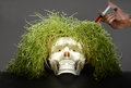 Grass scull like metaphor of danger Royalty Free Stock Photo