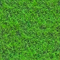 Grass seamless pattern (1 of 2). Royalty Free Stock Photo