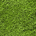 Grass seamless pattern Stock Images