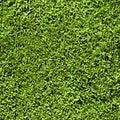 Grass seamless pattern Royalty Free Stock Photo
