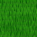 Grass seamless vector background green in line Stock Photography