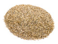 Grass Seeds Royalty Free Stock Images