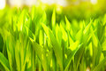 Grass shine Royalty Free Stock Photos