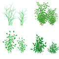 Grass, shrubs Royalty Free Stock Photography