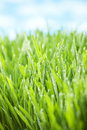 Grass sky background a close up of wet with a horizon Royalty Free Stock Photos