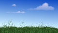 Grass and Sky Panorama Royalty Free Stock Image