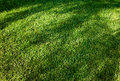 Grass Sod Stock Photography