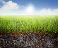 Grass soil Royalty Free Stock Photo