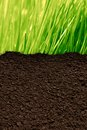 Grass and soil green background with a texture Stock Photo