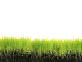 Grass with soil isolated on white Royalty Free Stock Image