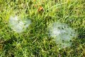 Grass Spiders Web on grass and dew in the morning , handiwork of spider Royalty Free Stock Photo