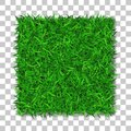 Grass square 3D. Beautiful green grassy field, isolated on white transparent background. Lawn abstract nature texture