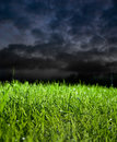 Grass in stormy weather Royalty Free Stock Images