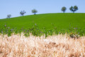 Grass in summer hilly meadow green Royalty Free Stock Images