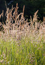 Grass on the summer meadow detail Stock Photo