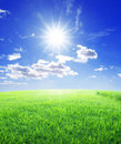 Grass sun and blue sky Royalty Free Stock Photo