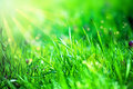 Grass and sunlight Royalty Free Stock Photography