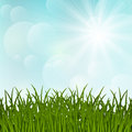 Grass on sunny background spring Stock Photos
