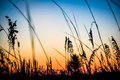 Grass in sunset Royalty Free Stock Photo