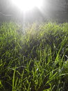 Grass in sunshine green and sunlight Royalty Free Stock Photography