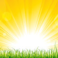 Grass on the sunshine rays vector illustration of Royalty Free Stock Photos