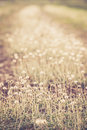 Grass swaying beautiful in the summer background Royalty Free Stock Photos
