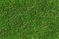 Grass texture Stock Photography