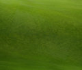 Grass texture Stock Photography