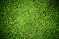 Royalty Free Stock Image Grass Texture