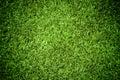 Tráva textúra