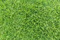 Grass texture or grass background. Green grass for golf course, soccer field or sports background concept design. Royalty Free Stock Photo