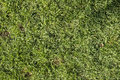 Grass texture beautiful fresh green background Royalty Free Stock Image