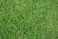 Grass texture closeup of a lush green Stock Photo