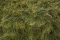 Grass texture green in alpine forest Stock Image