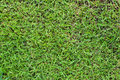 Grass texture green seamless seamless in only horizontal Royalty Free Stock Image