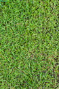 Grass texture green seamless seamless in only vertical Royalty Free Stock Images