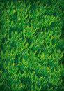 Grass texture illustration light green background Stock Images