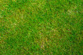 Grass texture lawn from directly above Royalty Free Stock Images